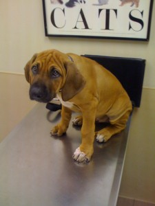 Motown's first visit to the vet.